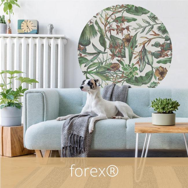 forex-muurcirkel