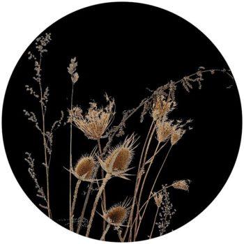 zelfklevend-behang-cirkel-ZENNO zwart
